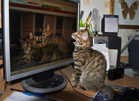 可愛い猫画像ブログ(787)