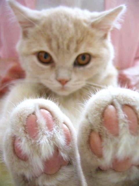 可愛い猫画像ブログ(1027)