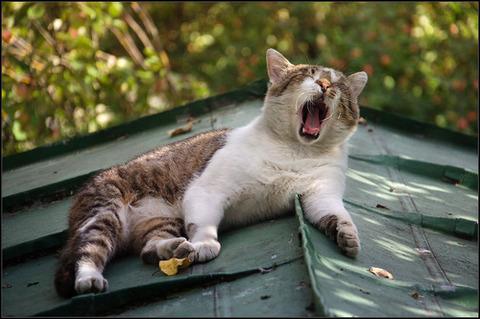 可愛い猫画像ブログ(1118)