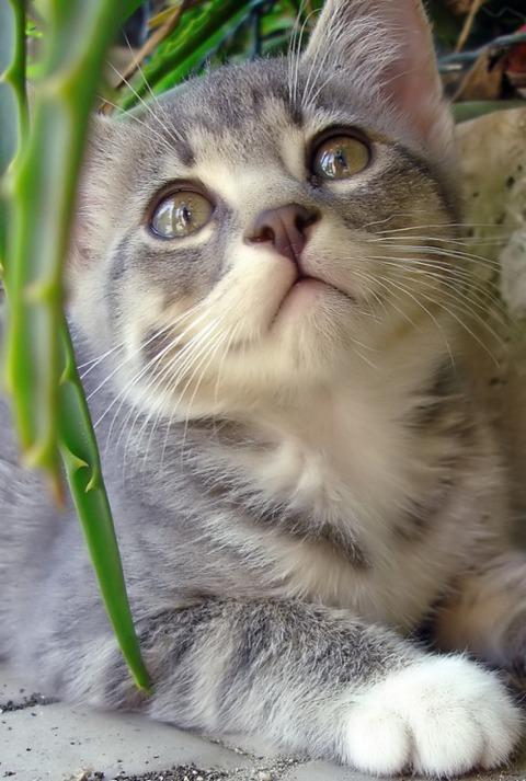 可愛い猫画像ブログ(1284)