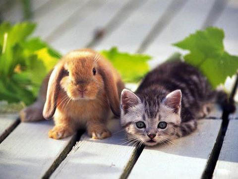 可愛い猫画像ブログ(762)