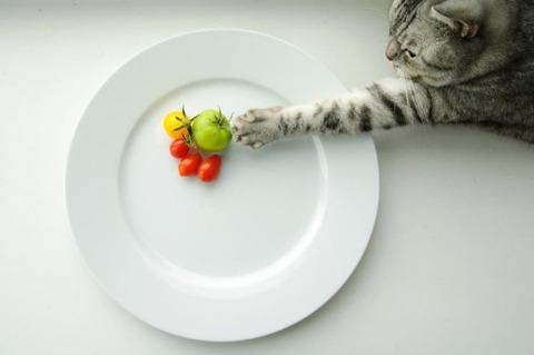 可愛い猫画像ブログ(1266)