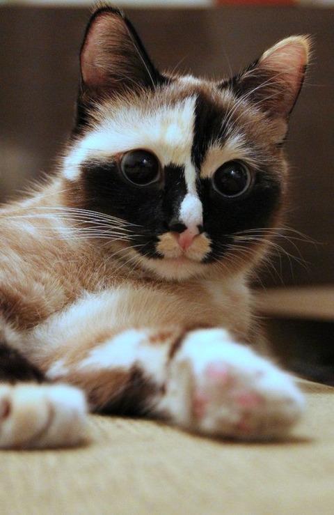 可愛い猫画像ブログ(978)