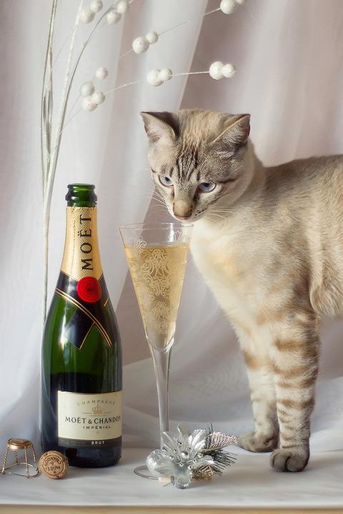 可愛い猫画像ブログ(1220)