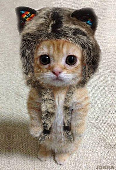 可愛い猫への躾 kitten's Profile 1046