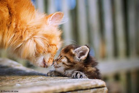 可愛い猫画像ブログ(1231)