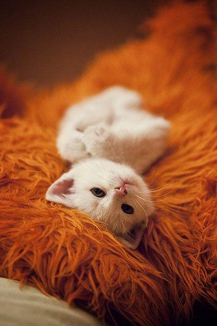 可愛い猫画像ブログ(1055)
