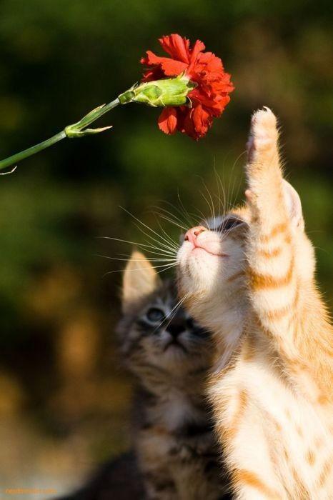 可愛い猫画像ブログ(1228)