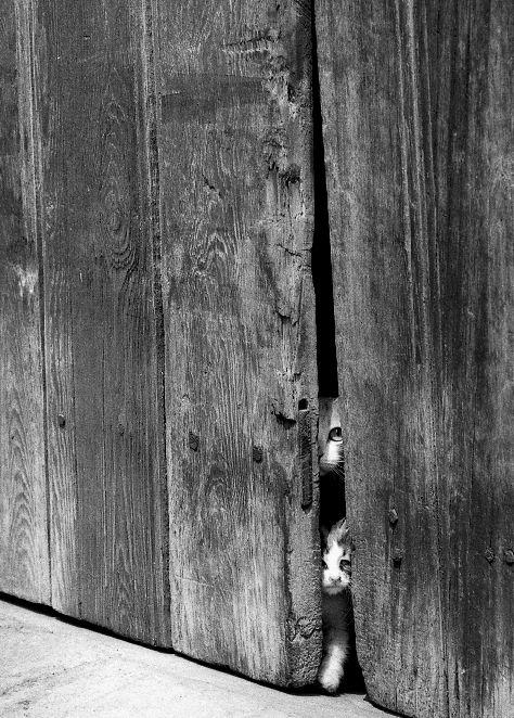 可愛い猫画像ブログ(1277)