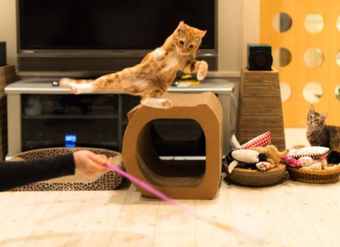 可愛い猫画像ブログ(1335)