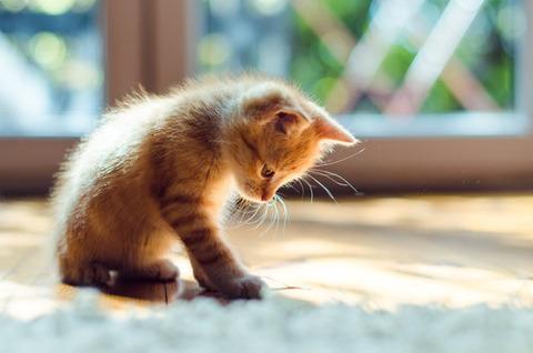 可愛い猫画像ブログ(1148)