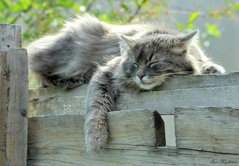 可愛い猫画像ブログ(1219)