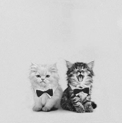 可愛い猫画像ブログ(1195)