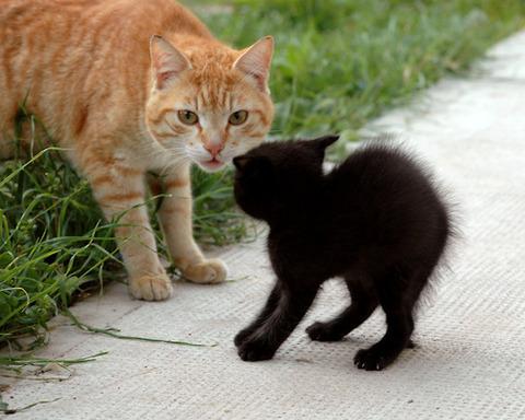可愛い猫画像ブログ(1065)