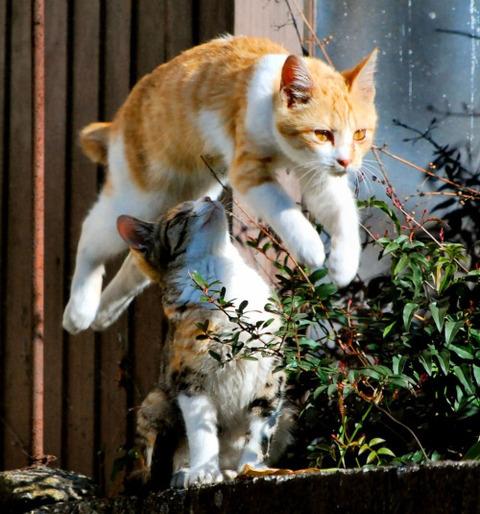 可愛い猫画像ブログ(1306)