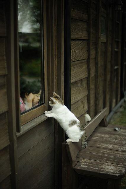 可愛い猫画像ブログ(755)