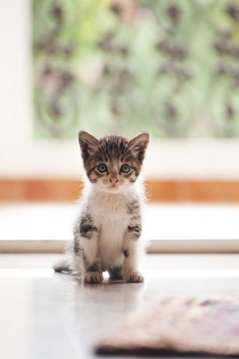 可愛い猫画像ブログ(1339)