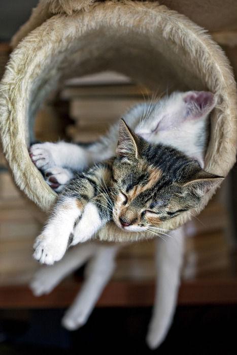 可愛い猫画像ブログ(985)