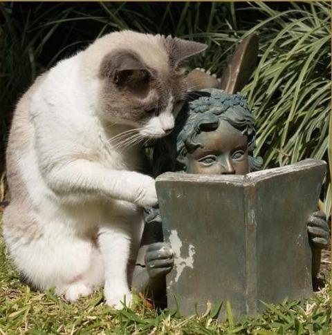 可愛い猫画像ブログ(754)