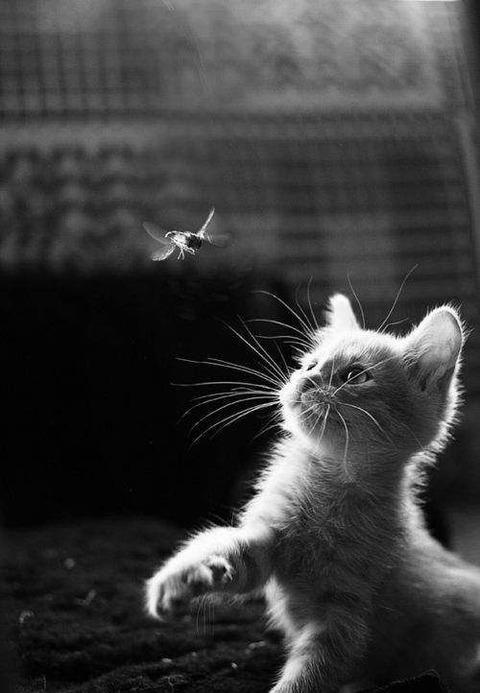 可愛い猫画像ブログ(1255)