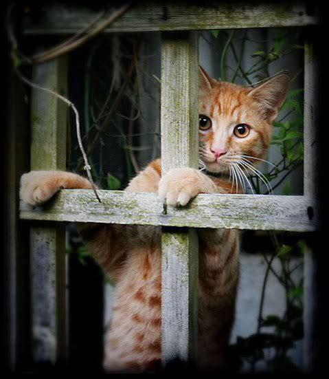 可愛い猫画像ブログ(1341)