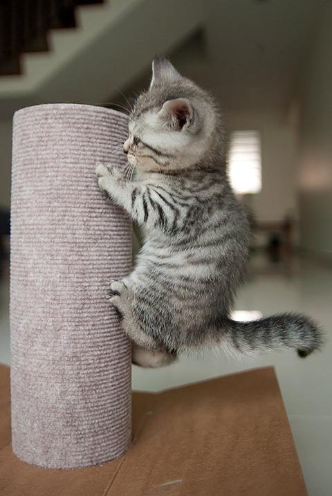 可愛い猫画像ブログ(1034)