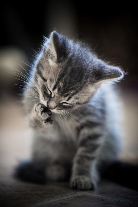 可愛い猫画像ブログ(1267)