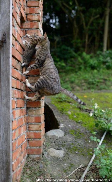 可愛い猫画像ブログ(766)