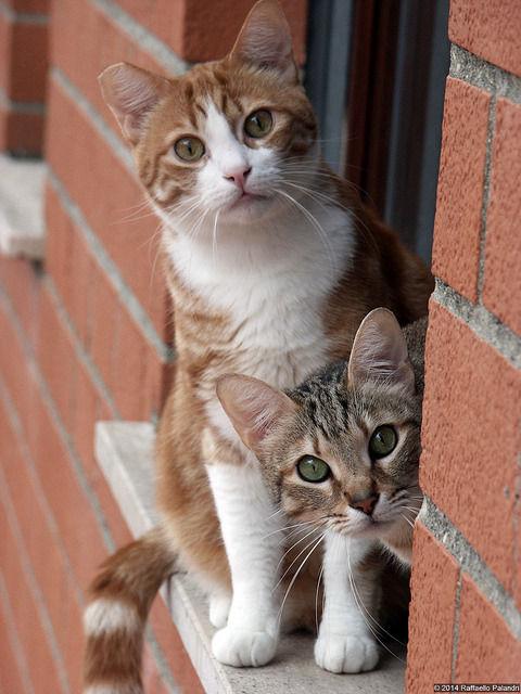 可愛い猫画像ブログ(1322)