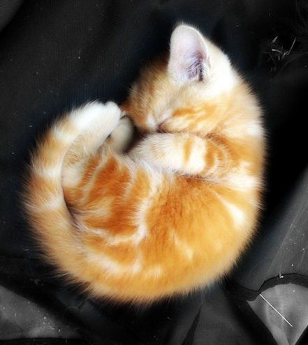 可愛い猫画像ブログ(1276)