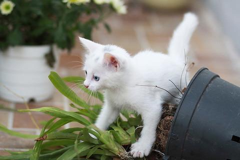 可愛い猫画像ブログ(1331)