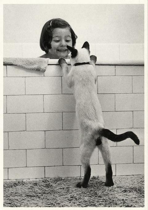 可愛い猫画像ブログ(1260)