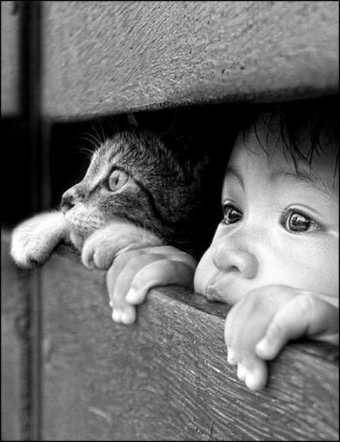 可愛い猫画像ブログ(1252)