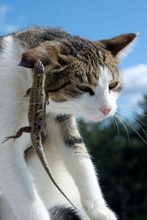 可愛い猫画像ブログ(1058)