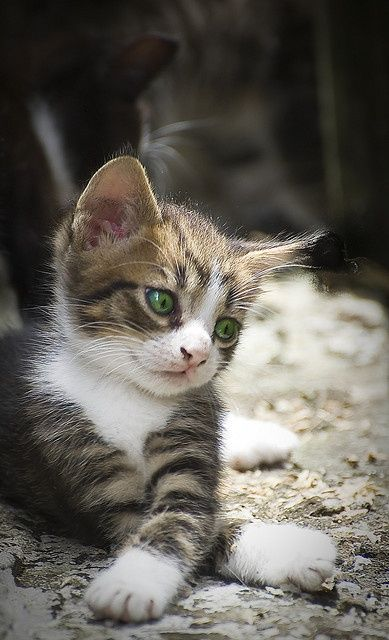 可愛い猫画像ブログ(1048)