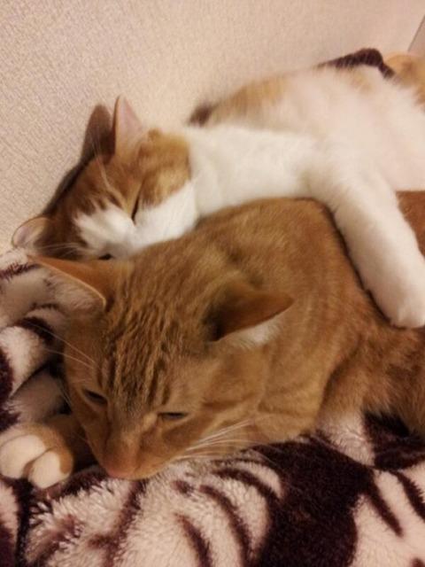 可愛い猫画像ブログ(1244)
