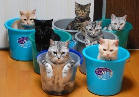 可愛い猫画像ブログ(1210)