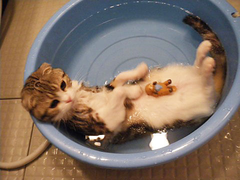 可愛い猫画像ブログ(1353)