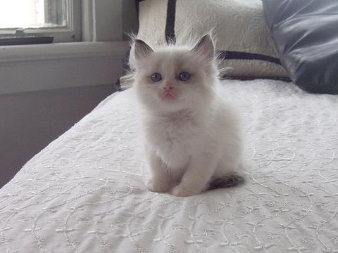 可愛い猫画像ブログ(1145)