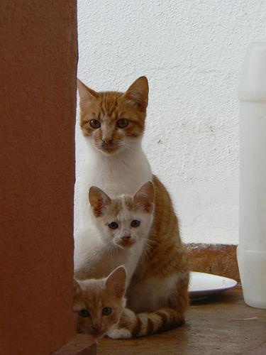 可愛い猫画像ブログ(971)