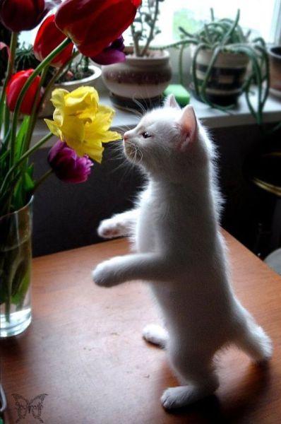 可愛い猫画像ブログ(1235)