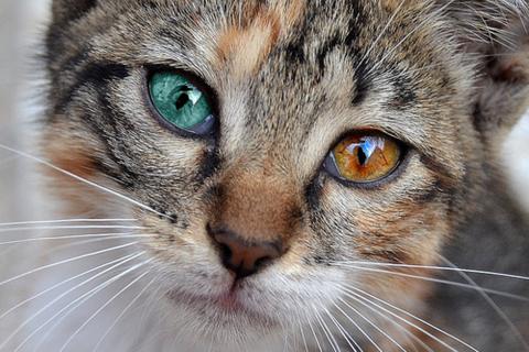 可愛い猫画像ブログ(792)