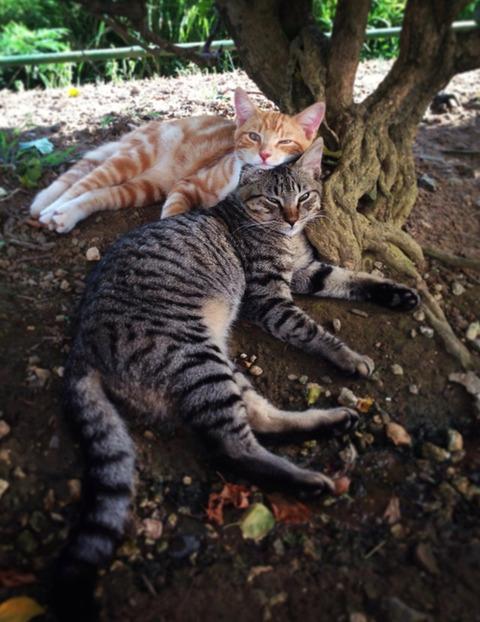 可愛い猫画像ブログ(970)