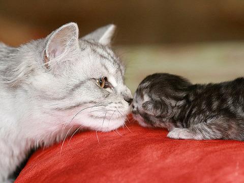 可愛い猫画像ブログ(781)
