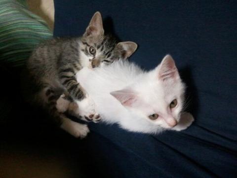 可愛い猫画像ブログ(1077)