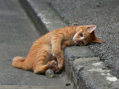可愛い猫の仕草 kitten's Profile No 987