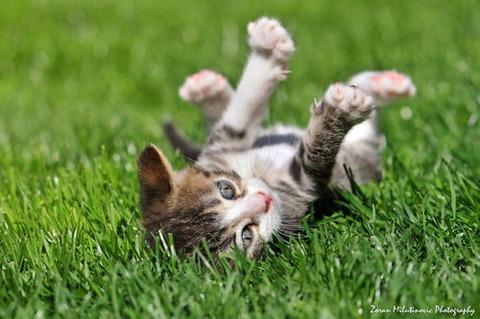 可愛い猫画像ブログ(1238)