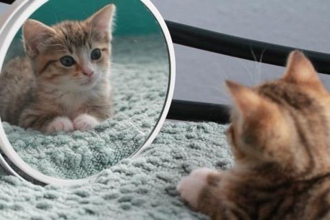 可愛い猫画像ブログ(1286)