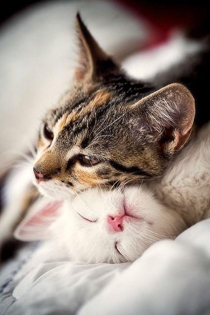 可愛い猫画像ブログ(1253)