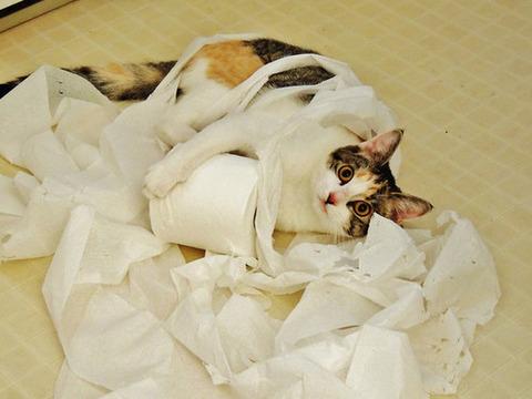 可愛い猫画像ブログ(1166)